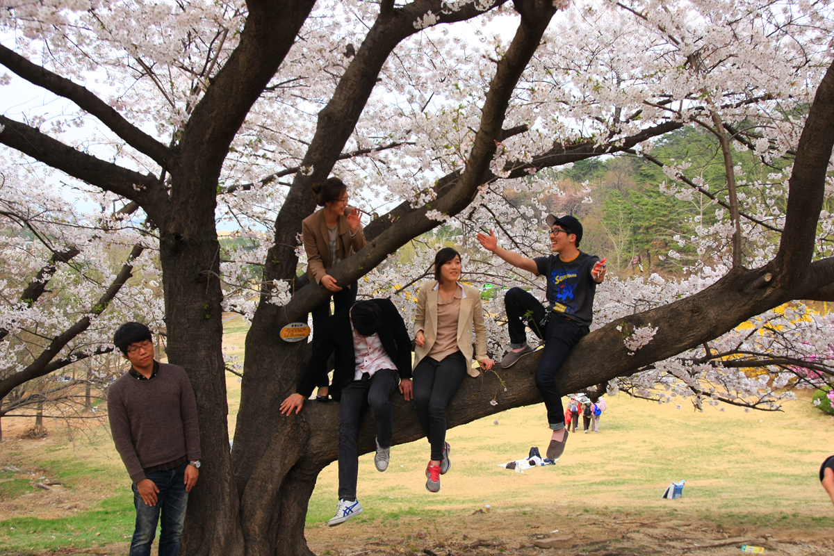 2012 4 20 blossom IMG_0696.jpg