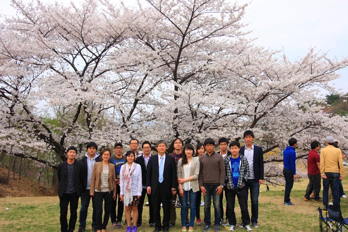 2012 4 20 blossom IMG_0680.jpg